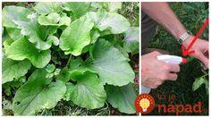 Ak vašu záhradu napadli vošky a húsenice, odporúčam použiť ho!