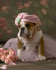 The major breeds of bulldogs are English bulldog, American bulldog, and French bulldog. The bulldog has a broad shoulder which matches with the head. Cute Puppies, Cute Dogs, Dogs And Puppies, Doggies, Baby Animals, Cute Animals, Funny Animals, English Bulldog Puppies, Pet Day