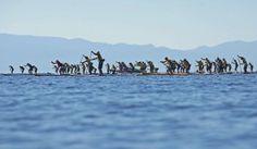Shop Talk: Tahoe Paddle & Oar | SUP Magazine