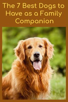 Types Of Dogs Breeds, Dog Breeds List, Best Dog Breeds, Best Family Dog Breeds, Dog Types, Fluffy Dog Breeds, Fluffy Dogs, Funny Looking Dogs, Female Dog In Heat