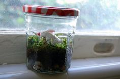 DIY: Terranium  Materials:  • Glass mason jar with lid (I used an old spaghetti sauce jar)  • Potting soil  • Activated charcoal (sometimes called terrarium charcoal)  • Small stones, pebbles, or gravel  • Sheet moss (sometimes called preserved sheet moss)  • Decorations (such as small toys, larger rocks, etc.)  • Chopsticks or bamboo skewers  • Spray paint (if desired)