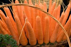 How to grow carrots / RHS Gardening
