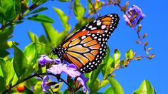 Spring Butterfly | Spring Flowers And Butterflies Wallpaper Spring flower wallpaper
