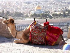 inthemiddleeast: An homage to all things Middle Eastern Jerusalem, West Bank, Palestine