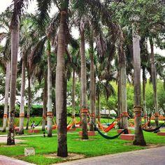 hammocks! // University of Miami