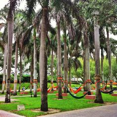 hammocks! // University of Miami