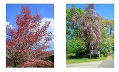 Hibiscus House Spotlight~ Author Series:  Beth Duke
