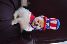 Happy 4th of July from Chia