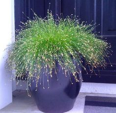 fiber-optic-grass-indoor