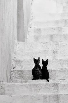 Cuteness overload Black White Photos, Black And White Photography, Animals Black And White, Crazy Cat Lady, Crazy Cats, Animals Beautiful, Beautiful Cats, Cool Cats, I Love Cats
