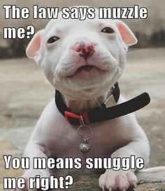 awww! Pitbull love!