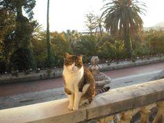 Villa Ormond e i suoi ospiti - Sanremo