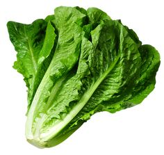 Lettuce PNG Picture