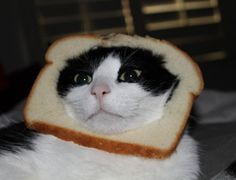 Such a strange craze but very funny! Cat Breading!