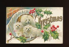Very Cute~ Trio of Dogs Puppies ~ Antique Embossed Christmas Dog Postcard-eee15