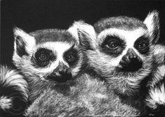 scratchboard art | Heather Ward Wildlife Art: More Scratchboard
