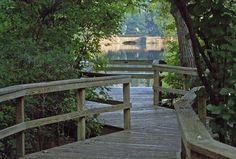 A view of Benjamin Lake- The Bog Garden at Benjamin Park, Greensboro NC | Winston-Salem, Triad, Wedding Venue |