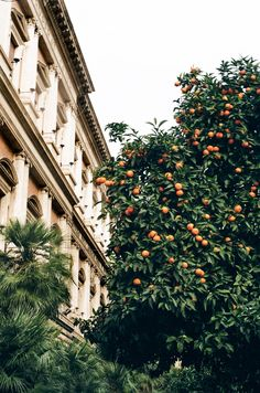 pinterest: @lilyosm | orange tree italy southern mediterranean architecture buildings travel wanderlust