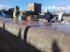 busy life at the port of Essaouira #morocco #harbour #port #cat #seagull #holiday #vacation #sightseeing