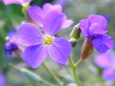 More Purple