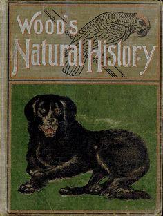 Wood's Natural History...Rev.J.G.Wood 1899