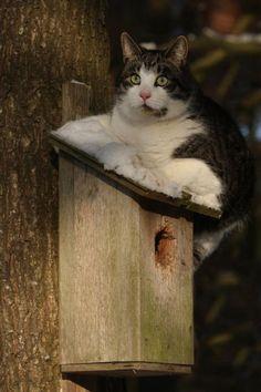 Birdhouse Protector (or predator) :)