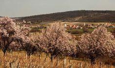 Dörgicse Hungary, Vineyard, Travel, Outdoor, Outdoors, Viajes, Vine Yard, Vineyard Vines, Trips