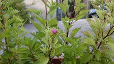 Pflanze Nummer 3 bekommt eine Blüte ! Mal sehen ob ich anhand der Blüte die Pflanze erkenne Plants, Plant, Planets