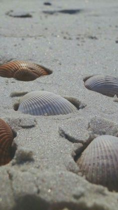 sea shells half buried in beach sand Beach Aesthetic, Summer Aesthetic, Orange Aesthetic, Shells And Sand, Sea Shells, Photowall Ideas, Ocean Wallpaper, Apple Wallpaper, Wallpaper Backgrounds