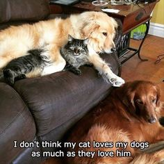 Dump A Day Funny Animal Pictures Of The Day - 40 Pics