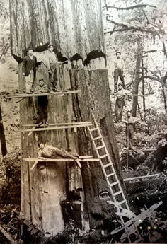 Was tagged: loggers in California.  But I think it's a shame that we cut down so many ancient trees.
