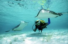 Turks and Caicos Diving. Find out what to expect of Grand Turk diving and why the Turks and Caicos is a diver's paradise in general. Santa Lucia, Turks And Caicos Diving, Belize, Haiti, Honduras, Scuba Destinations, Vietnam Destinations, Grand Turk Island, Costa Rica
