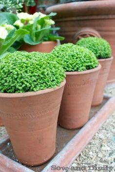 Spring Garden Inspirations -