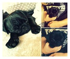 Zoe and Alfie's little bundle of cuteness Nala :) aaahhhh <3 soooo cute x