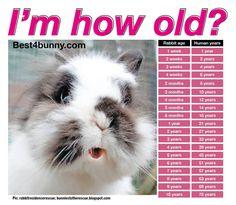 Bunny years... www.best4bunny.com