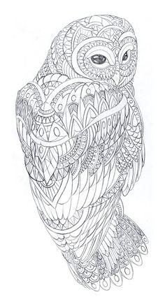 Image of Skateboard Owl Sketch