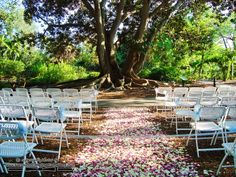 Marie Selby Botanical Gardens Wedding In Sarasota, FL By Sarasota Catering  Company (1083)