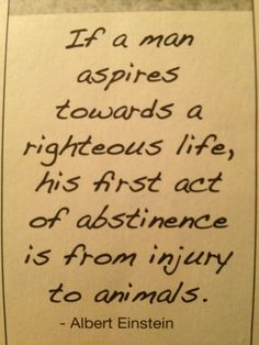 """stop animal abuse and exploitation for profit, go ~ """"if a man aspires towards a righteous life, his first act of abstinence is from injury to animals"""" ~Einstein Great Quotes, Inspirational Quotes, Awesome Quotes, Vegan Quotes, Stop Animal Cruelty, Think, Einstein Quotes, Animal Quotes, Animal Pics"""