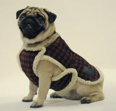 Bilderesultat for Одежда для собак