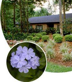 Florida Friendly Landscaping, Florida Plants, Florida Gardening, Lawn ... low maintenance fla