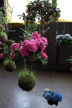 Ethereal Beauty: Fedor van der Valk Discusses His String Gardens: Here are the poppies that Fedor noted were difficult to work with.  : FV: And of course the Japanese have been doing this for thousands of years. It was a bit de-motivating when I found out about kokedama, but like I said if you think about it, it's not that difficult or groundbreaking.