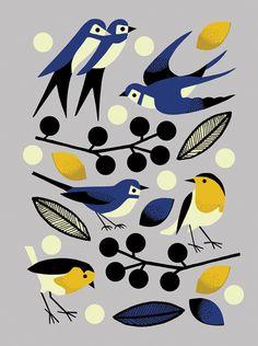 Garden Birds commission for Rosenstiels Fine Art publishing by Nadia Taylor
