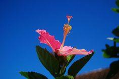 Una de las flores más románticas y bellas