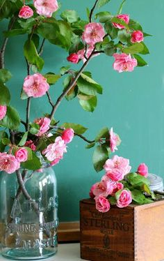 Gorgeous crabapple blooms - makes a perfect cut flower for spring