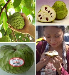Because I don't know where to save this. This is a cherimoya. Cooking Light says it's a creamy pineapple-banana-coconut-flavored fruit. Tell me that doesn't sound amazing! Exotic Fruit, Tropical Fruits, Exotic Plants, Fruit And Veg, Fruits And Veggies, Fresh Fruit, Weird Fruit, Weird Food, Health Eating