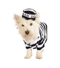 Bag Dog! This pooch needs to spend some time thinking about what he's done in this cute Prisoner Costume! Whether your puppy is playing an escaped prisoner or is spending time in the kennel, there's one thing we can be sure of; he's guilty of stealing our hearts! $17.99 http://www.petcostumecenter.com/dog-costumes/138-prisoner-costume.html #dog #costume #prisoner