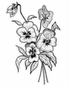 Image result for pansy black and white drawing