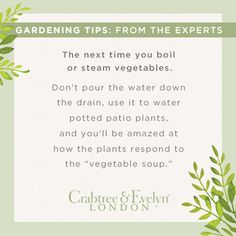 Gardening Tip # 1 - Plants love their vegetables!