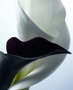 Cest la vie - Fabrice Bouquet - Texture