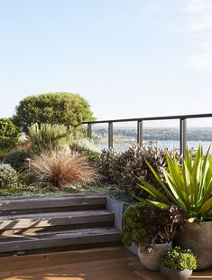 Klaus and Anne Schindhelm share their expansive apartment 'backyard' in Sydney with spectacular water views! garden A Robust Rooftop Garden In Rozelle Apartment Backyard, Landscape Design, Garden Design, Rooftop Design, Coastal Gardens, Australian Garden, The Design Files, Patio, Decoration Design